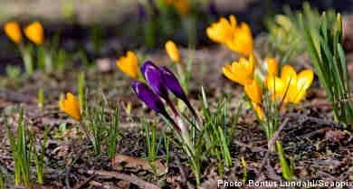 Spring arrives in southern Sweden