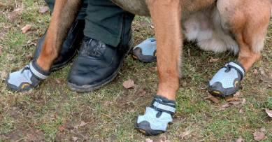 German police dogs get special footwear