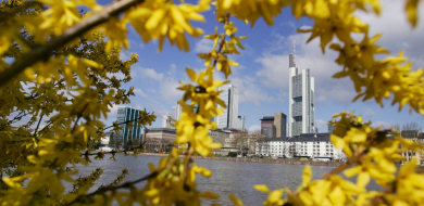 The art of discovering Frankfurt