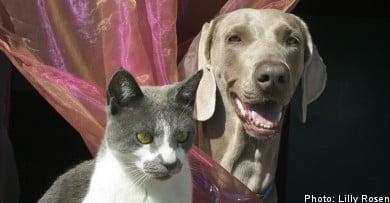 Sweden regulates pet ownership