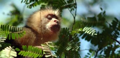 Germany pledges €500 mln at UN biodiversity talks