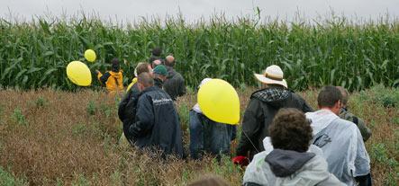 Bavarian police arrest 50 for destroying GM corn field
