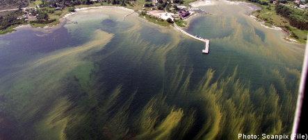 Baltic Sea gasps for air