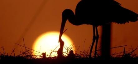 Dry spell threatens baby stork population in Germany