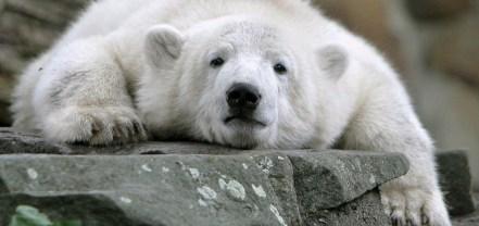 Pet psychic says Knut has a heavy heart