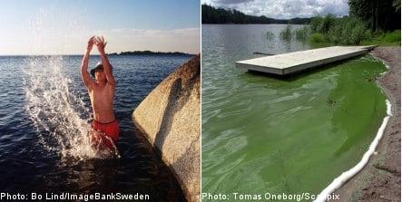 Summer warmth brings algae threat