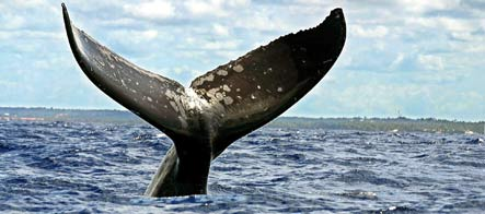 Humpback whale sighted off of Germany's northern coast