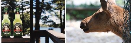 Drunken elk meets sorry end after toddler attack