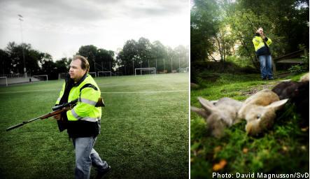 Stockholm shoots 4,000 wild rabbits