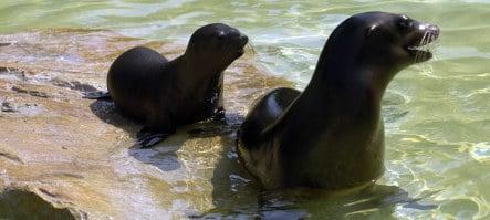 Baby sea lion makes a splash at Berlin zoo
