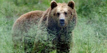 Bear attacks German tourist camping in Romania