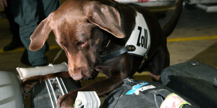 Dogs to sniff out endangered species trade in Frankfurt