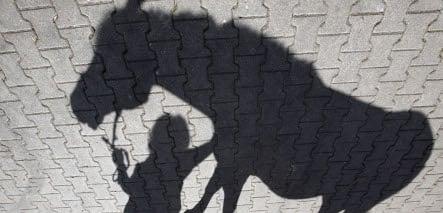 Horse demolishes public toilet in Bavaria