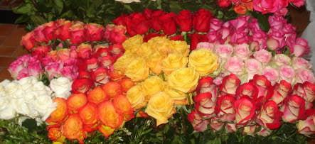 Colombian flower power reaches Sweden