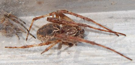 Spiders take over Hamburg's HafenCity