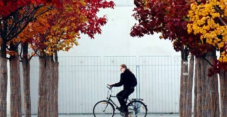 Berlin boasts brilliant fall leaves and a hefty cleanup bill