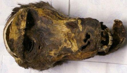 Maggot-infested monkey head found at Munich customs