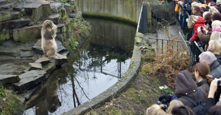 Man jumps into Knut's enclosure