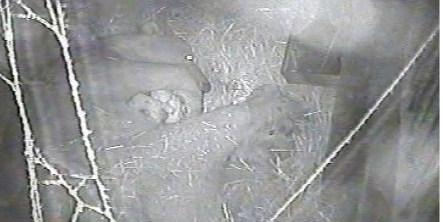 Twin polar bear cubs die at Nuremberg zoo