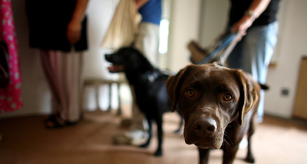 Germans open pet soup kitchens as recession begins to bite