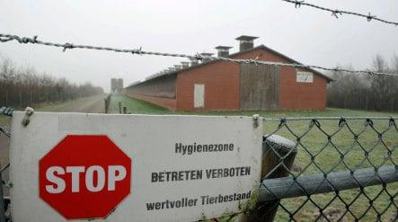 Authorities cull 100,000 fowl in bird flu epidemic