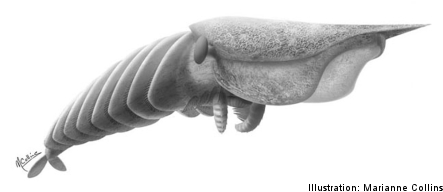 Swedish team helps uncover prehistoric 'monster predator'