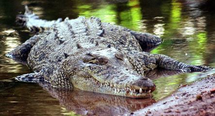 Crocodile on riverbank spooks cops near Berlin