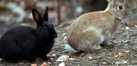 Easter bunny popular fare