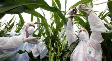 Berlin bans genetically modified crops