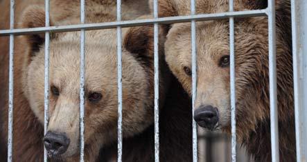 Police shoot circus bear dead