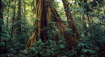Pelikan probed for using endangered woods