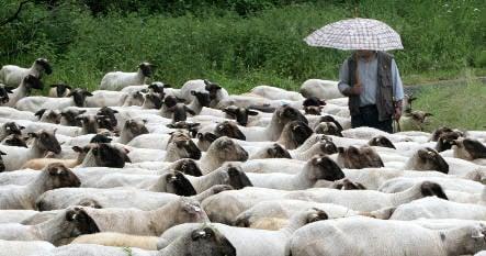 'Sheep's Chill' cold snap hits Germany
