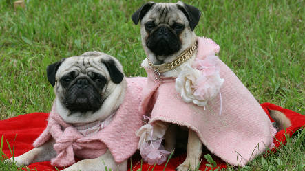 Pampered pooches pull on German purse strings