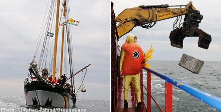Greenpeace launches cod-fishing protest