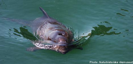 Porpoises make welcome Baltic return