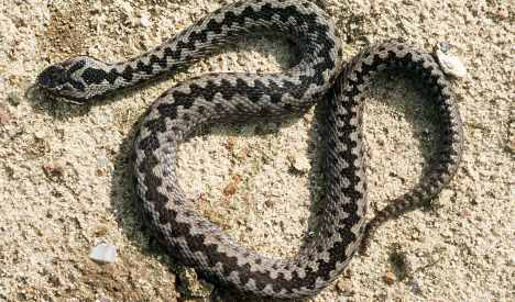 Poisonous snake bites British tourist in Bavarian supermarket