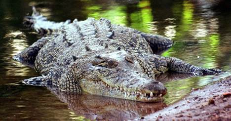 Bavarian teens spot suspected croc in pond