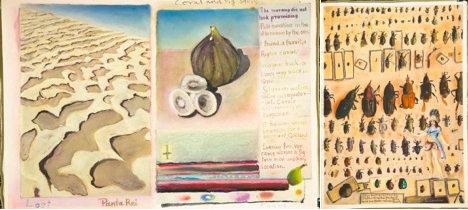 Sweden-based UK artist draws on Darwin for Stockholm exhibition