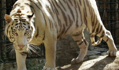 Another tiger attack as woman mauled at zoo