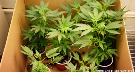 Police raids uncover cannabis-growing network