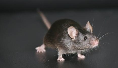 Mice invade German parliamentary building