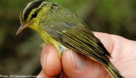 Swedish researchers discover new bird species