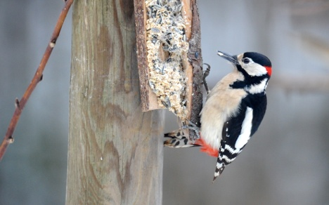 City invasion of 'wallpeckers' a boon for tradesmen