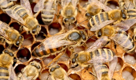Bee colonies wiped out by killer parasite