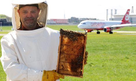Honey bees monitor air quality at Hamburg Airport