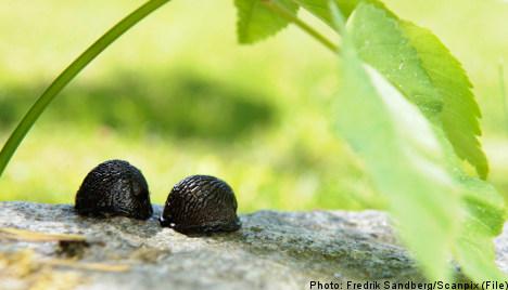'Big bully' fined for killer slug attack