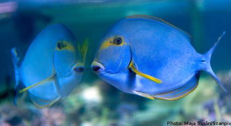 Murky waters hamper aquatic romance