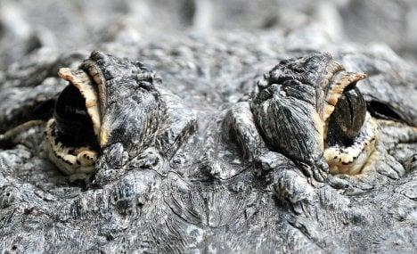 Ruhr crocodile sightings put Bochum police on alert