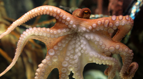 Paul the prophetic octopus retires with perfect record