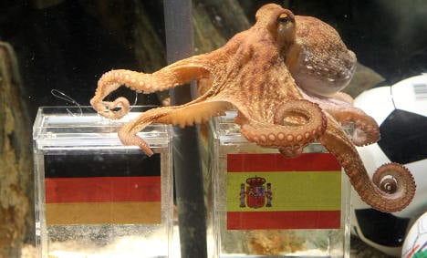 Paul the 'psychic' octopus tips Spain to beat Germany